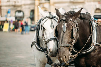 What's Wrong With Carriage Rides?