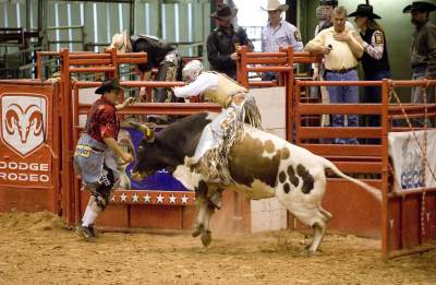 Rodeos Are Animal Abuse, Not Entertainment
