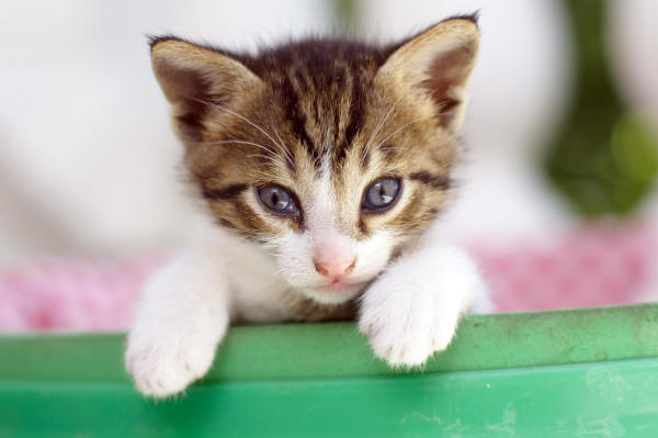 Declawing Cats Causes Aggression & Abnormal Behaviors