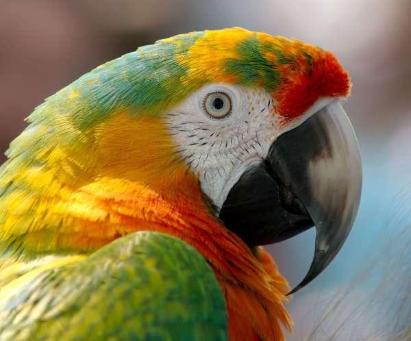 ADOPT A BIRD