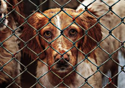 End The China Yulin Dog Meat Festival