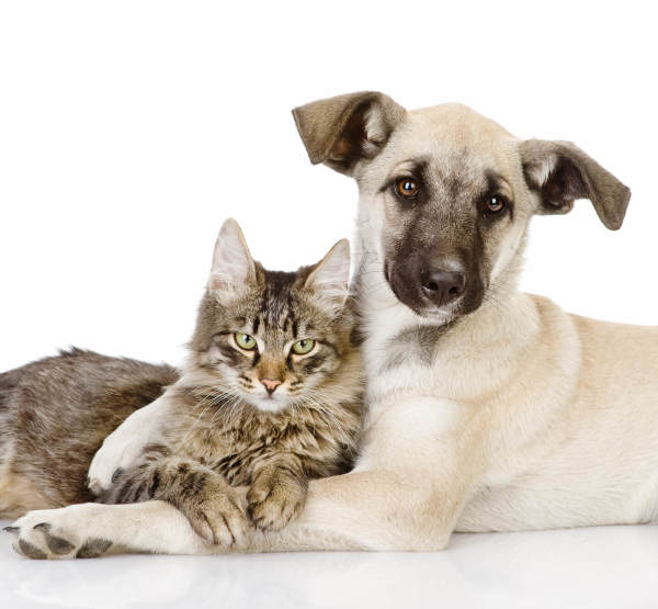 Do The Right Thing: Spay & Neuter