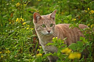 Stop Blaming Feral Cats