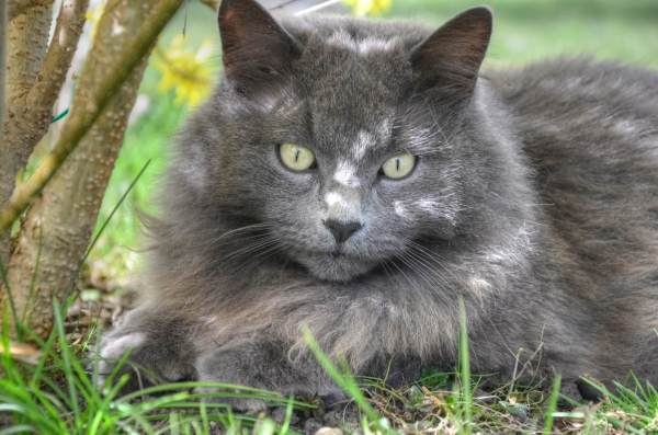 Feral Cats Are An Important Part Of The Environment