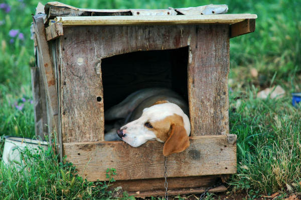 Chaining Your Dog Is Abuse