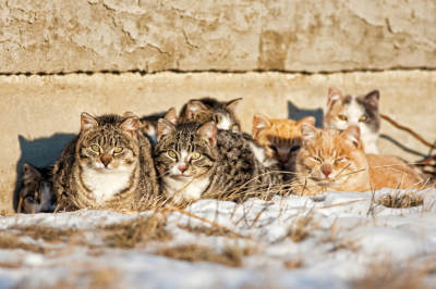 Do Feral Cats Live Miserable Lives?
