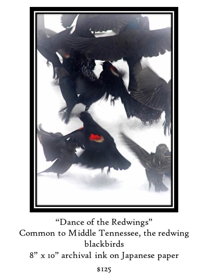 Dance of the red Wing