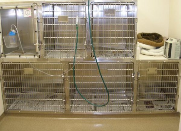 Kennel Rooms