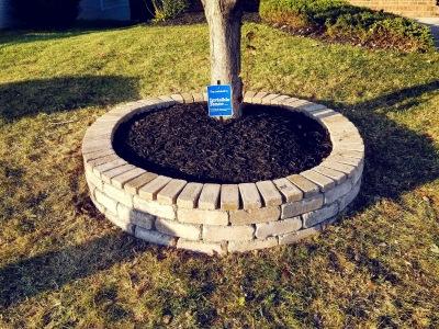 Tree Ring Installation