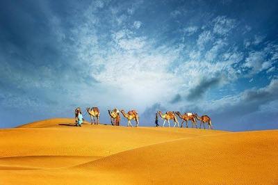 Morning Desert Safari DH125