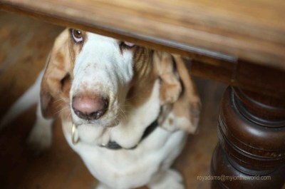 Hiding under the table