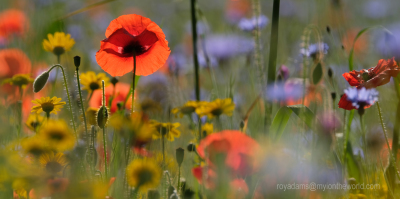 Exeter's Wildflower Meadows