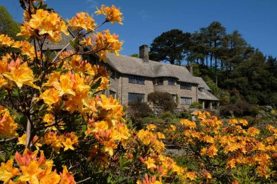 Framing a Masterpiece - Coleton Fishacre in its Spring Garden