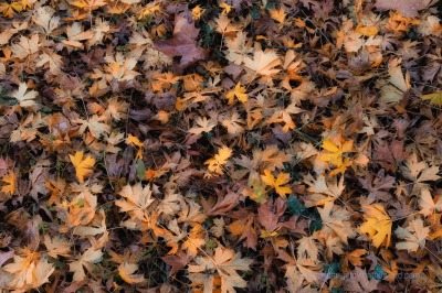 Searching for Autumn at the National Trust