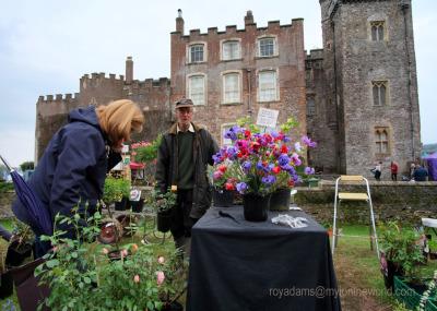 A Tour of Toby's Garden Festival
