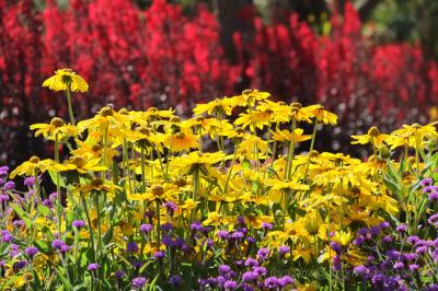Two Gardens in Torquay