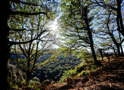Walking The Spectacular Teign Gorge From Castle Drogo