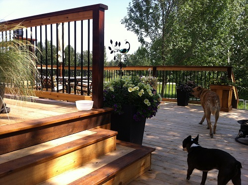 Multi level Calgary cedar deck