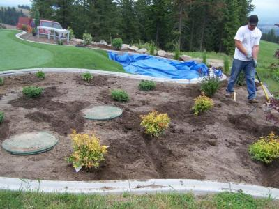 Accent Planting