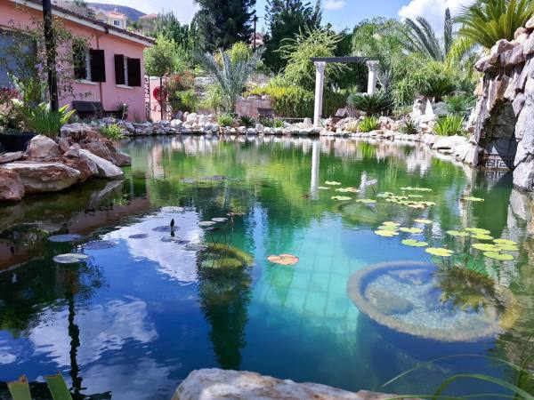 Common pool converted into Natural swimming pool