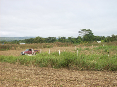 Lot @ Carmelita Gardens Cayo Belize
