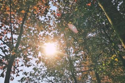 航拍大棠楓香林 Tai Tong Red Leaves