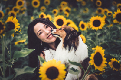 Iris Portrait @ Yuen Long Sun Flower