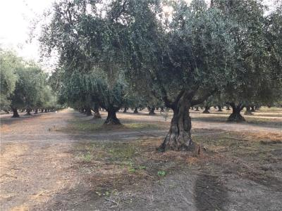Olive Orchard on County Rd E • Orland - $510,000
