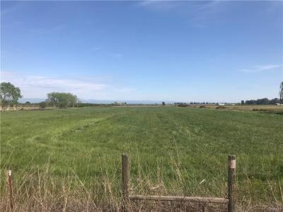 44 Acres - 5th Ave • Orland • CA - REDUCED to $794,000