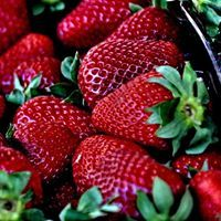 Strawberry picking is finish for the Year