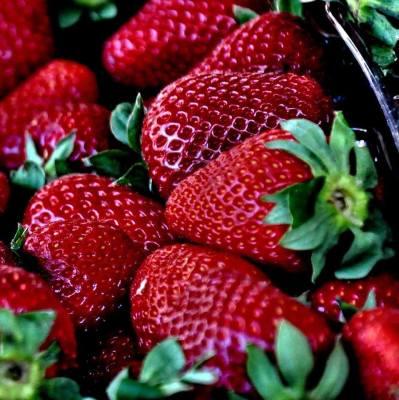 Strawberry U-Pick is OPEN