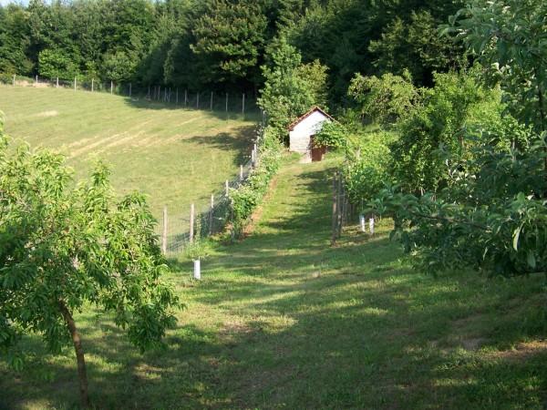 Obstgarten/Orchard