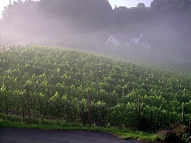Morgennebel/Morning fog