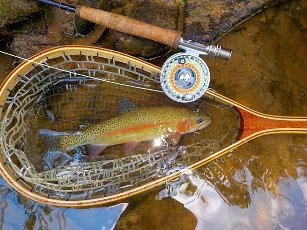 Wild Appalachian Rainbow