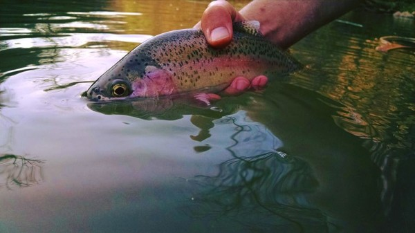Releasing a wild Rainbow