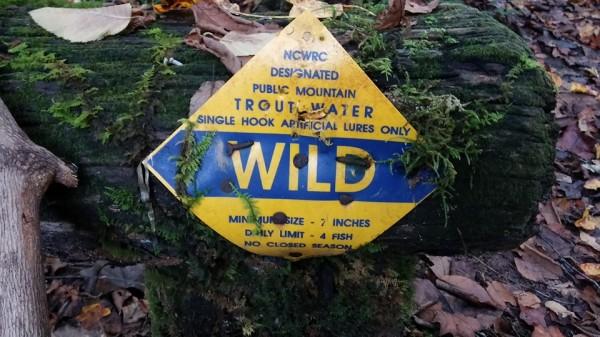 N.C wild trout stream