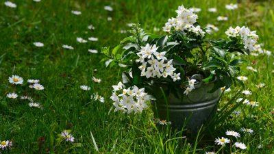 Rearranging Your Garden