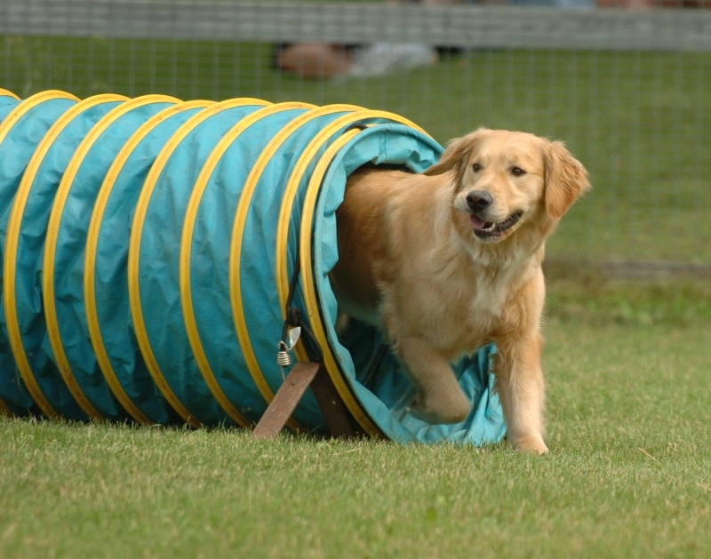 Good Dog's Agility Program