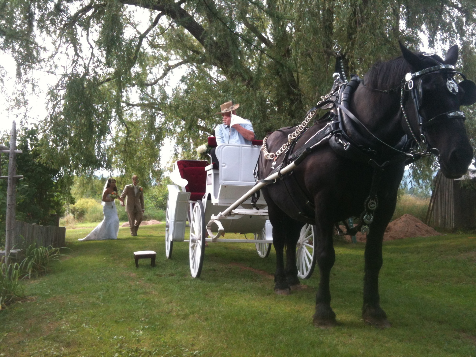 Bride & Groom with Horse & Carriage