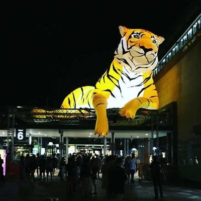 Tiger  - 2018