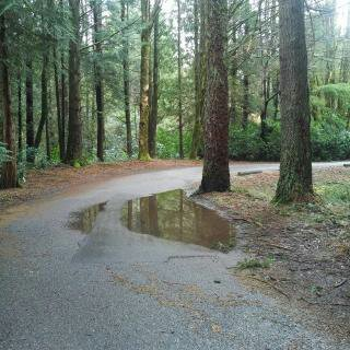 Wisdom: Uncovering Our Puddles
