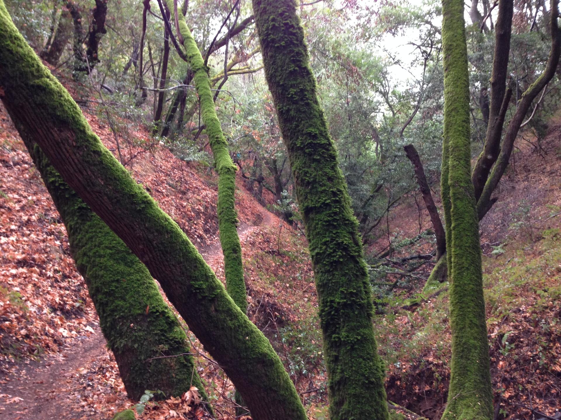 Spring hike - SF