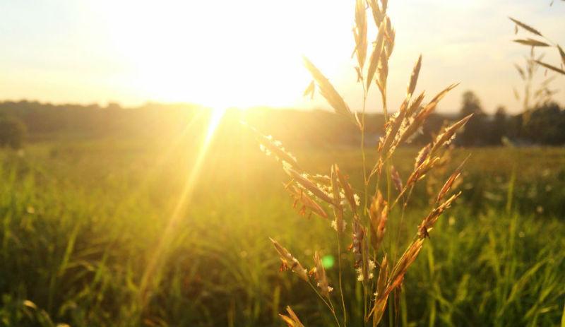 The Best Essential Oils for Seasonal Allergies
