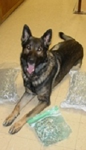 AIKO     June 2009-Present                                   (Partnered with Sgt. Ennemoser)