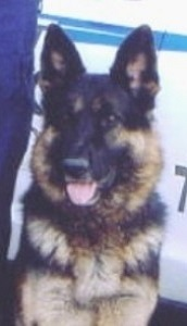 DAMON      1999-February 2004                                (Partnered with Ptl. Gilliland)