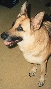 DUCHESS     1987-November 1991                              (Partnered with Ptl. Miller)