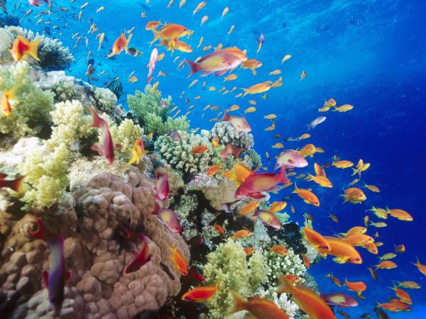 Cancun,Cozumel and Riviera Mayaun Package