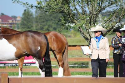 Spring Equine Clinic Series