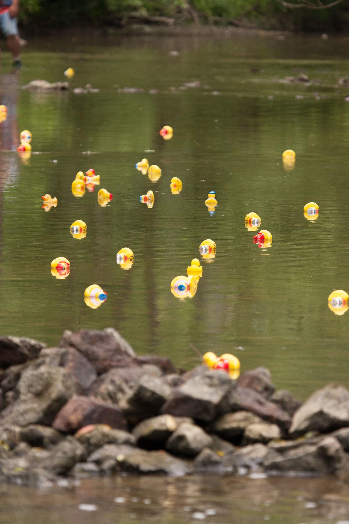 Rubber Duck Race
