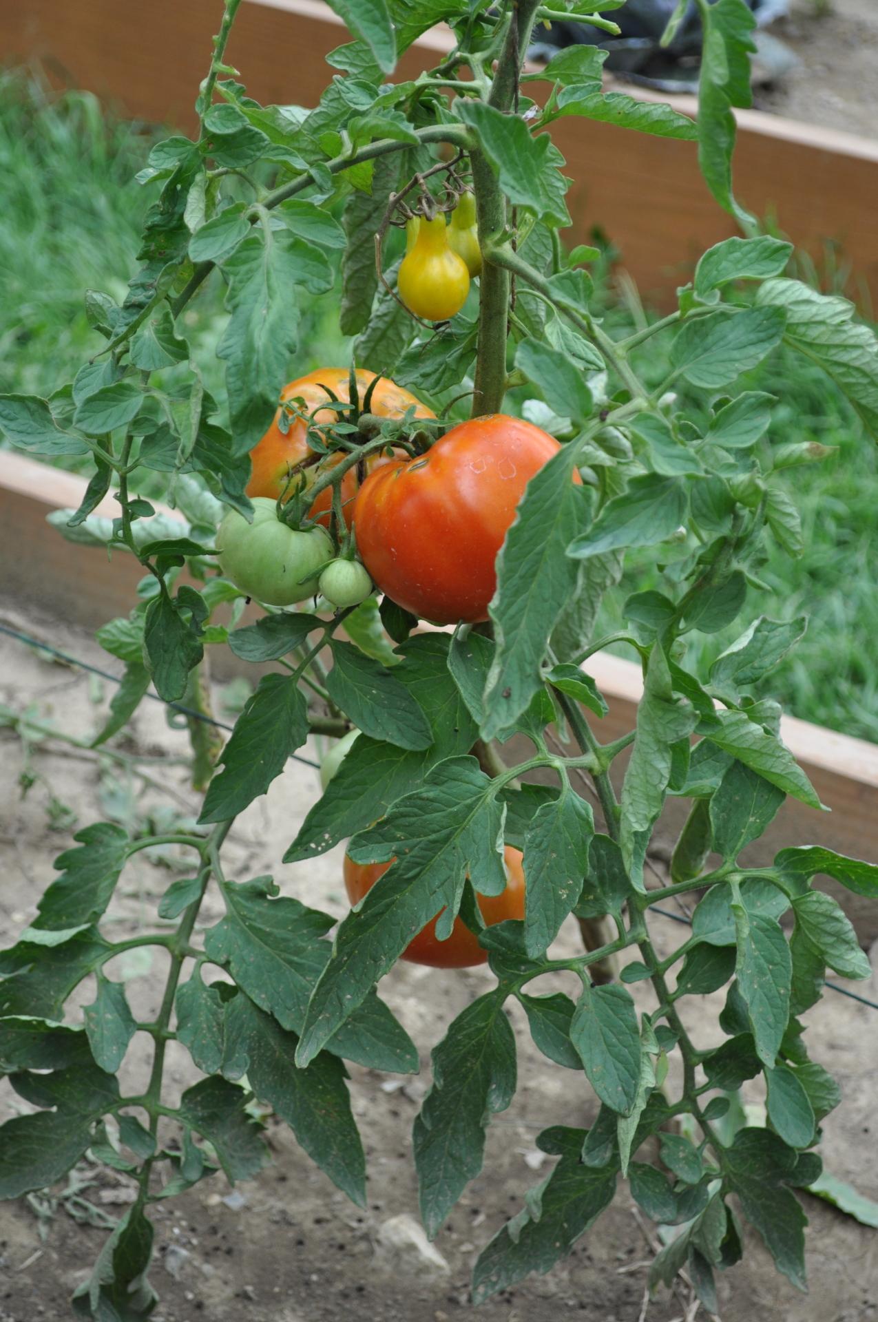 U Pick Organic Garden